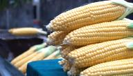 ما هي فوائد الذرة الصفراء