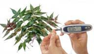 علاج مرض السكري بالأعشاب