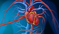 اعراض مرض شرايين القلب