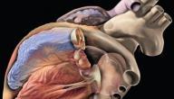 اعراض مرض قصور القلب