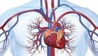 اعراض بطء الدورة الدموية