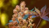 فوائد زيت الخروع للبشرة