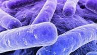 سبب بكتيريا البول