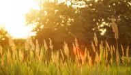 دواء ضربة الشمس