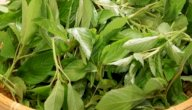 فوائد الملوخية الخضراء