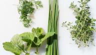 علاج نشاط الغدة الدرقية بالاعشاب