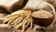 فوائد القمح الكامل للرجيم