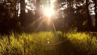 بحث عن ضربة الشمس