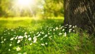أفضل علاج لحساسية الربيع