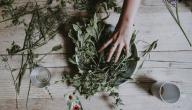 أعشاب لالتهاب الكلى والمسالك البولية