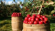 فوائد التفاح الاحمر للرجيم