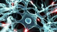 أين توجد الخلايا الجذعية