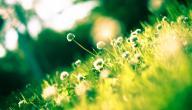 حساسية الربيع الجلدية