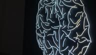 ما هي كيمياء الدماغ