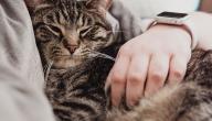 أضرار تربية القطط على صحتك!