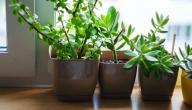 نباتات تنقي هواء منزلك: ما هي؟