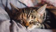 حساسية الحيوانات الأليفة: ما هي؟