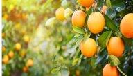 حقيقة فوائد البرتقال للجنس: وهل له آثار جانبية عليك؟
