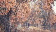 حقيقة فوائد ماء المطر الصحية: هل هي موجودة؟