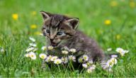 مرض القطط للبنات