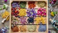 علاج دهون الكبد بالاعشاب