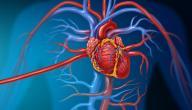ما هي أسباب مرض القلب