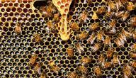 فيتامين غذاء ملكات النحل