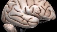 علاج ضمور المخ