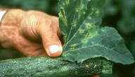 أمراض تسببها الفطريات
