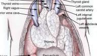 سرطان الغدة الزعترية
