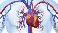بحث عن امراض جهاز الدوران