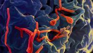 بحث عن مرض فيروسي