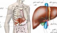 فوائد الكبد في جسم الانسان