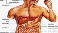 عملية الهضم عند الانسان