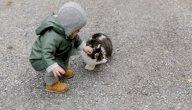 ما هو علاج داء القطط