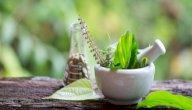 علاج التهاب مجرى البول عند النساء بالاعشاب