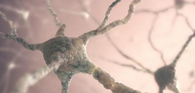 علاج مرض أعصاب المعدة بالأعشاب