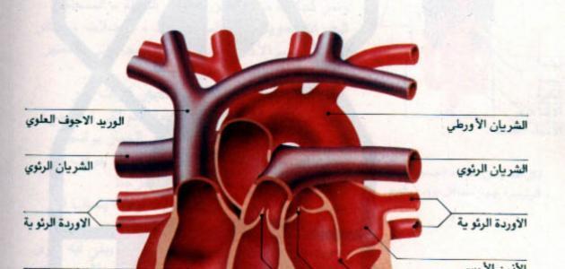 امراض صمام القلب
