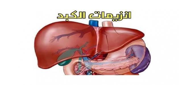 أسباب ارتفاع انزيمات الكبد