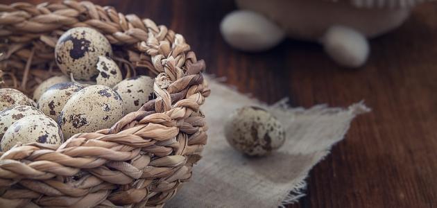 فوائد بيض السمان للشعر