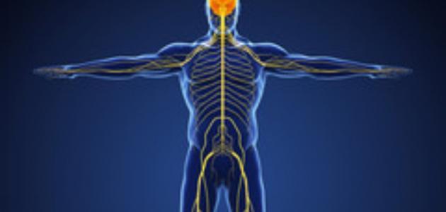 الجهاز العصبي المحيطي