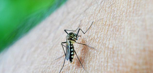 أين توجد جراثيم الملاريا