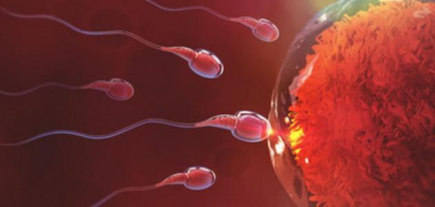 كيفية تكوين الجنين