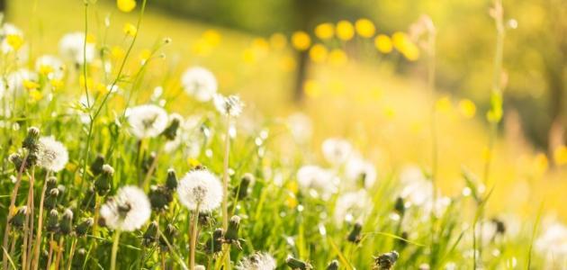 دواء حساسية الربيع