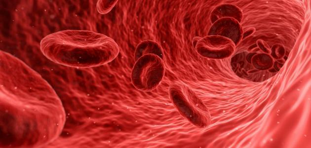 انخفاض الكرياتينين في الدم