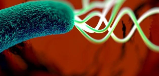 بكتيريا المعدة وعلاجها