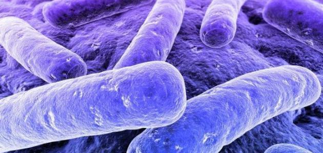 بكتيريا في البول