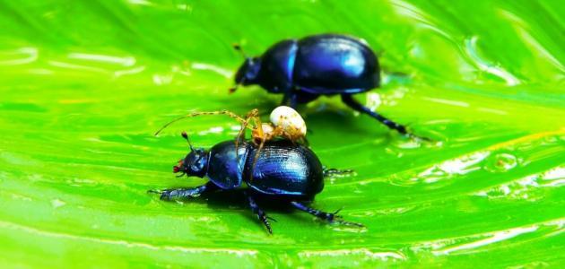 أعراض حساسية حشرة الفراش