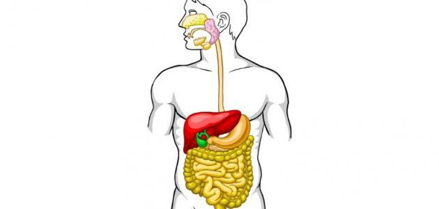 المحافظة على الجهاز الهضمي