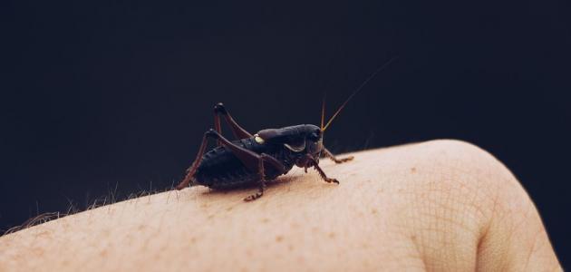 حساسية الحشرات